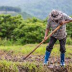 Entenda a Contagem de Tempo Rural para Aposentadoria!